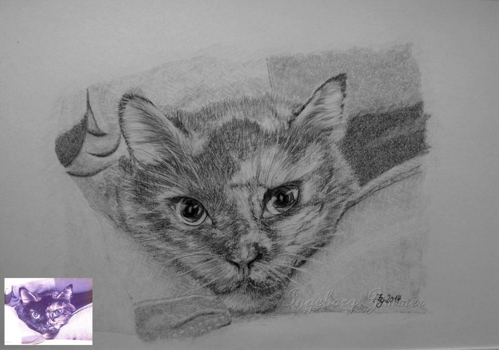 Katze...