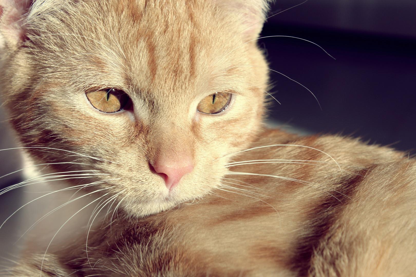 Katze :)