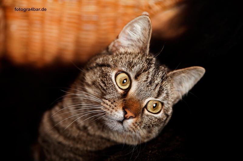 Katze!