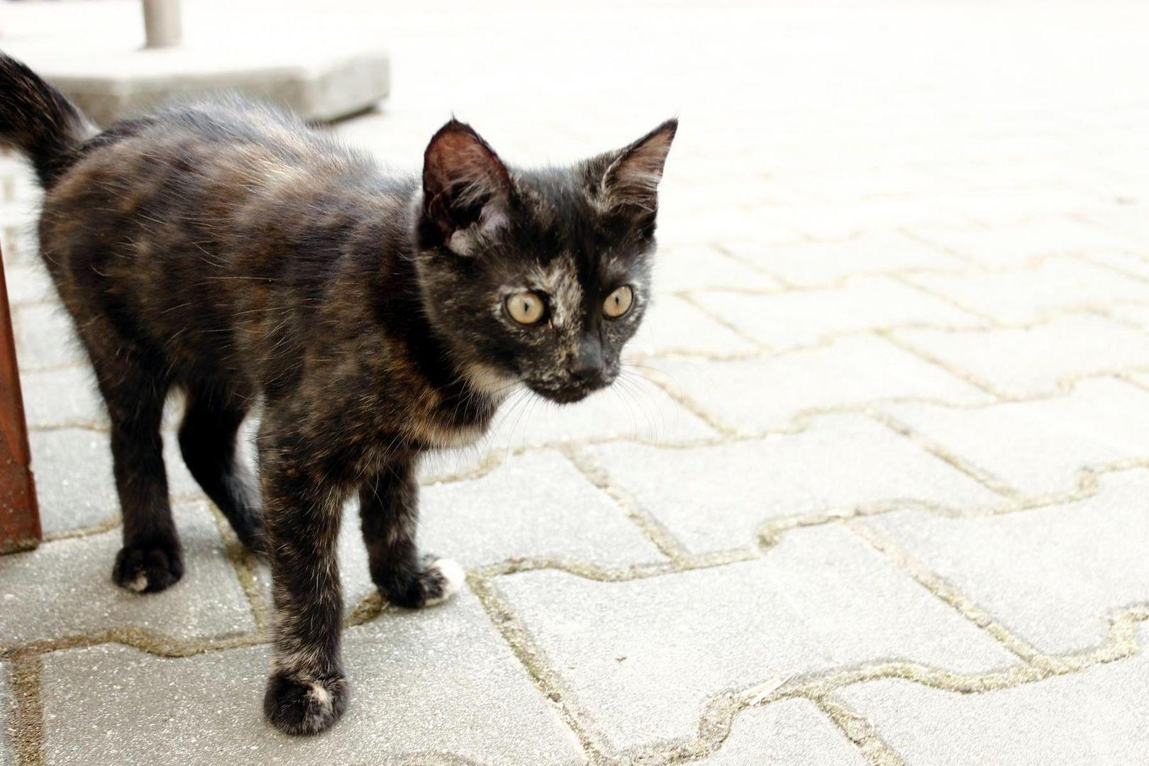 Katze *-*