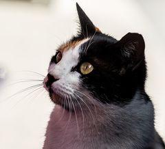 Katze als Beobachterin im Restaurant