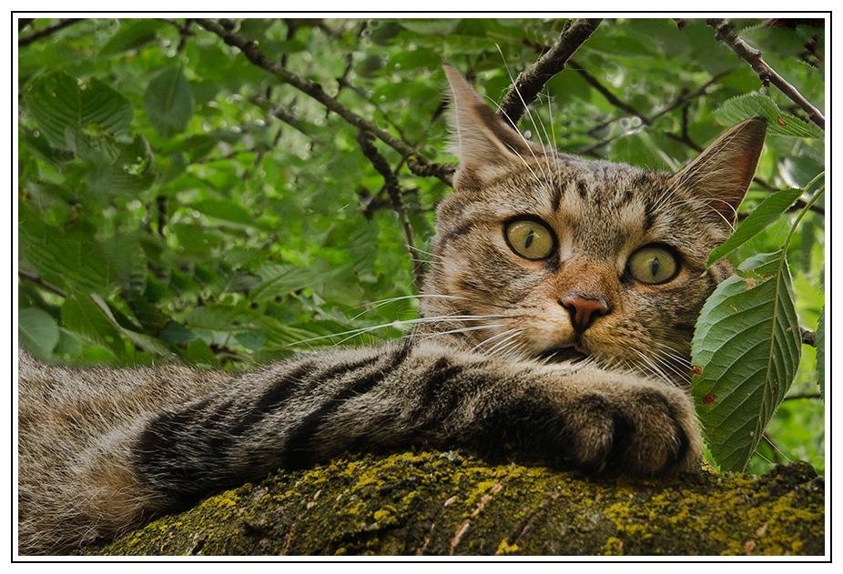 Katze am Baum