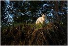 Katze auf altem Heuballen