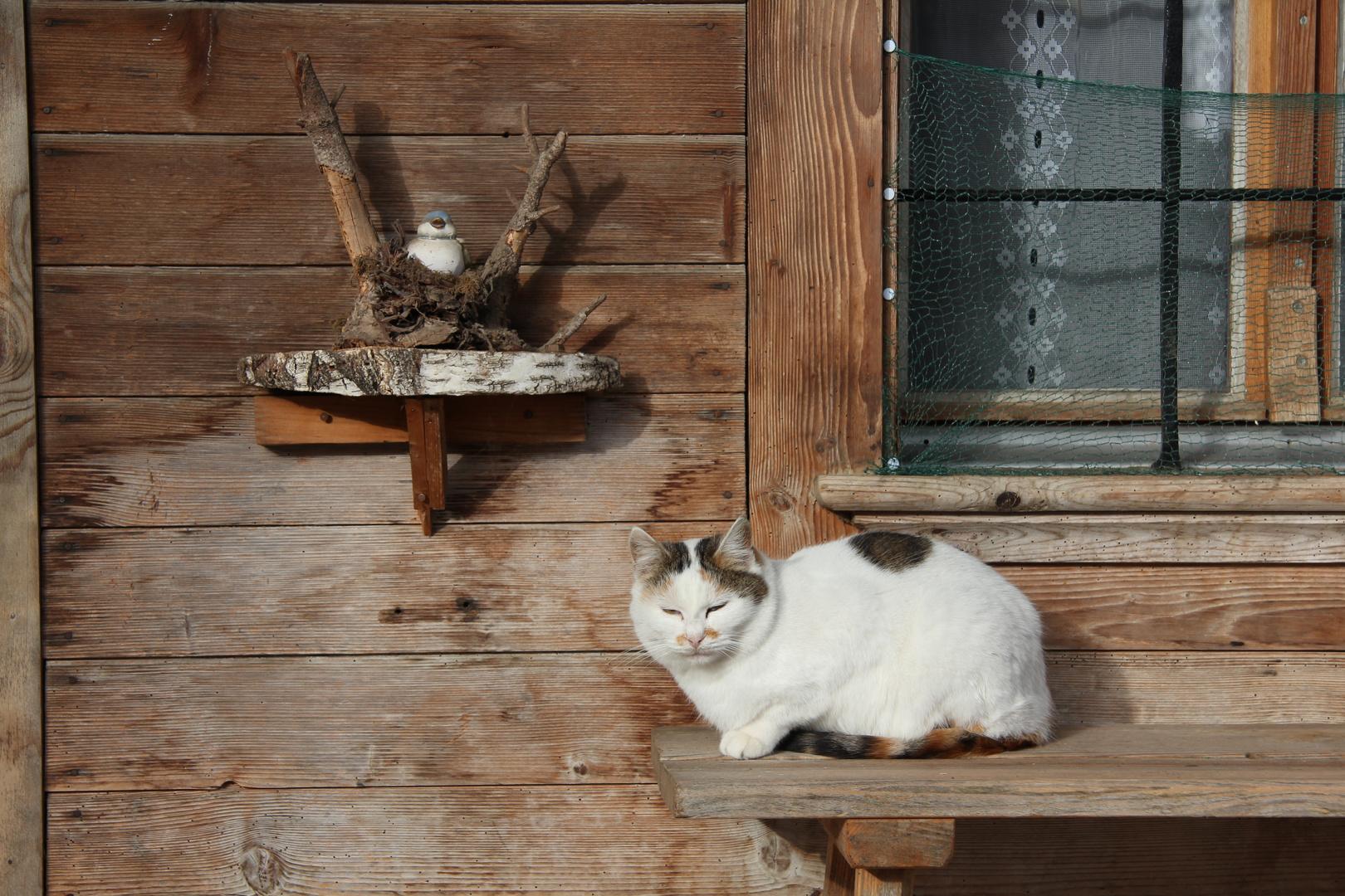 Katze auf Bank