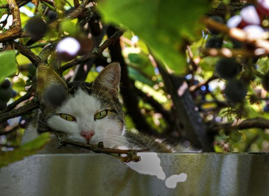 Katze auf dem Blechdach