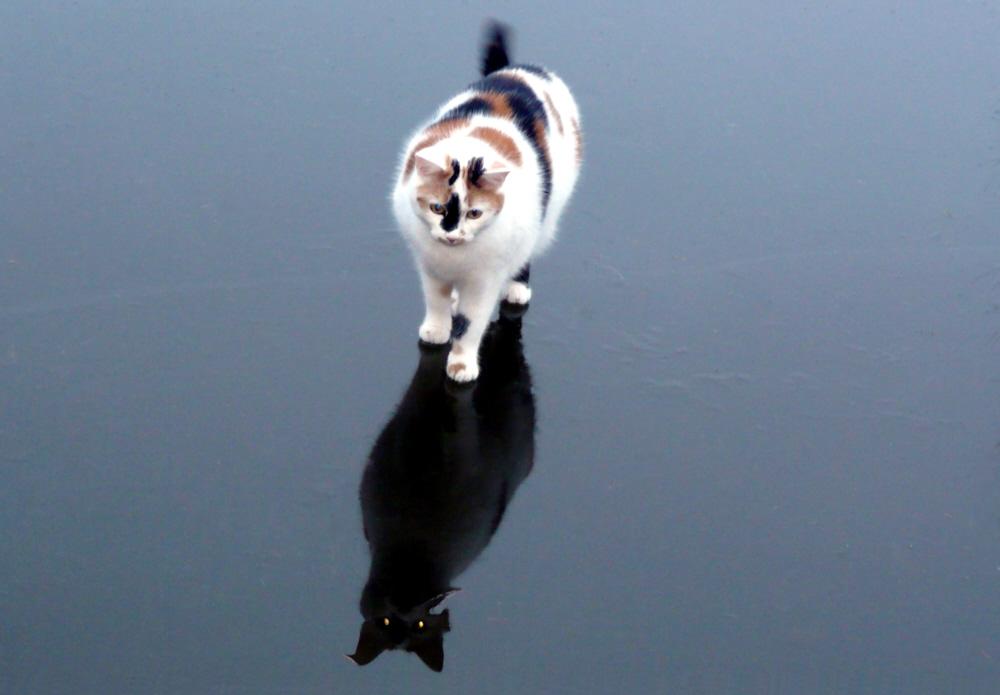 Katze auf dem Eis