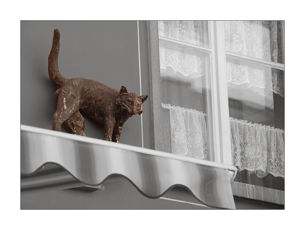 Katze auf dem heissen Blechdach