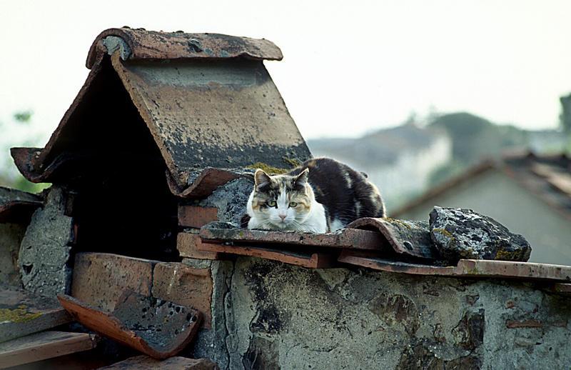 Katze auf dem heissen Dach