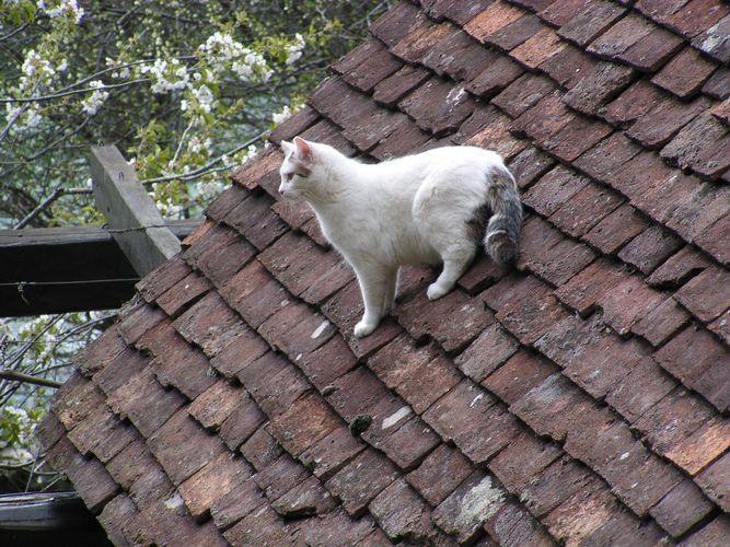 Katze auf dem heißen Ziegeldach