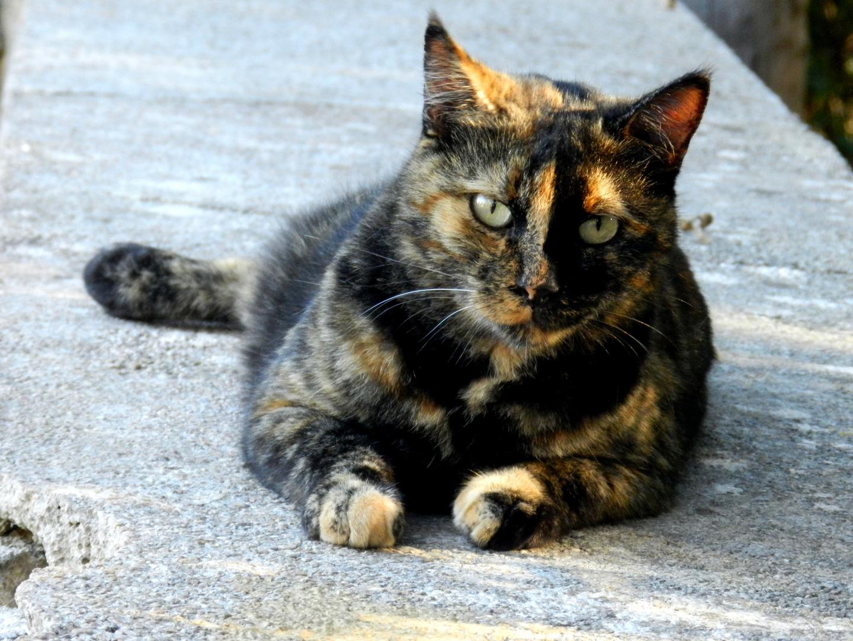 Katze auf dem Kalvarienberg in Pollenca