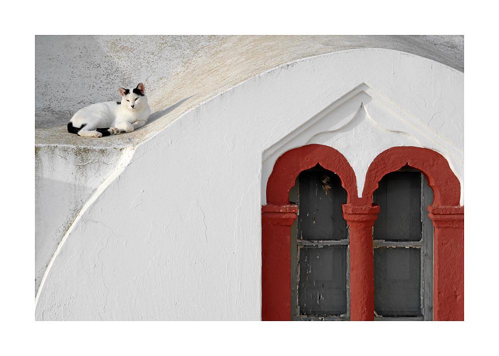 Katze auf dem Kirchendach (Santorini)