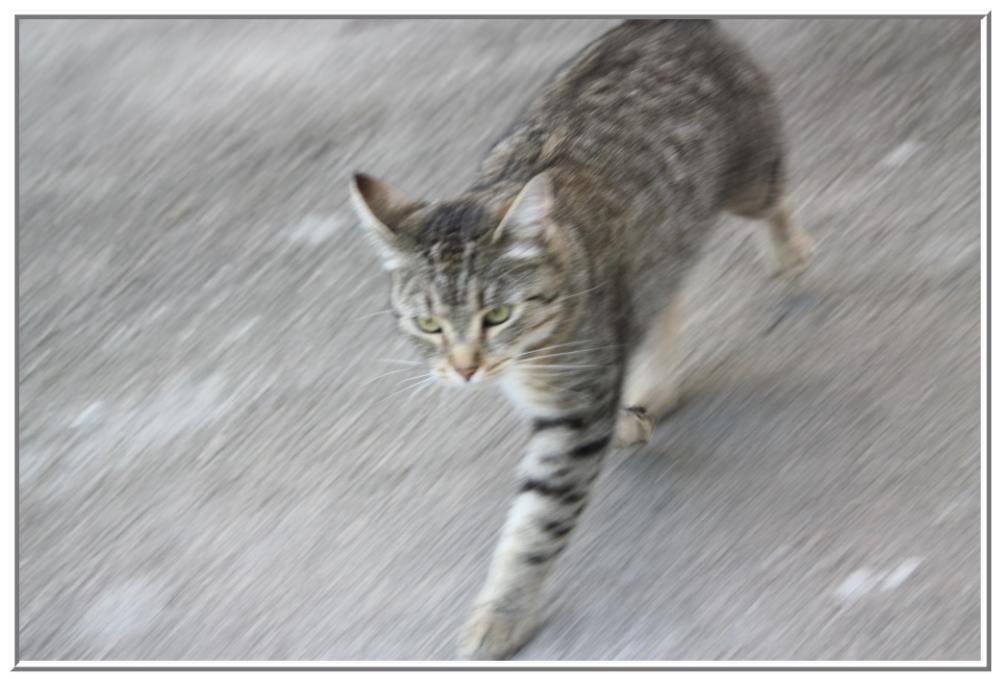 Katze auf der Flucht