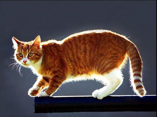 Katze auf der Stange