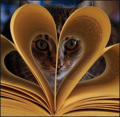 katze auf der suche nach der leseratte