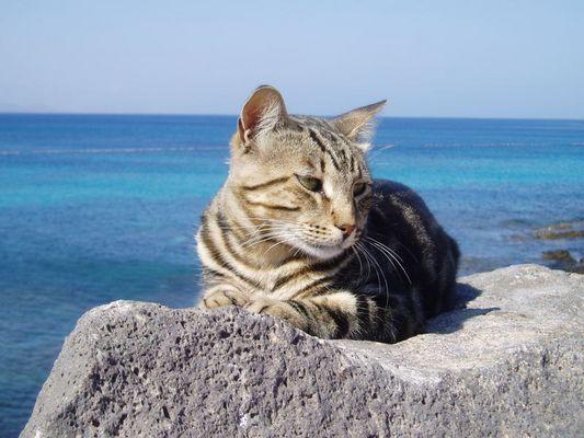 Katze auf einer Steinmauer