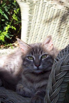 Katze auf Elba !