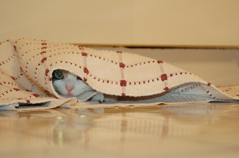 Katze auf Erkundung...