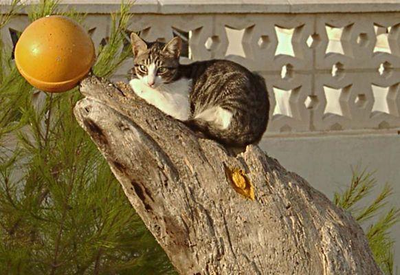 Katze auf Fundstück