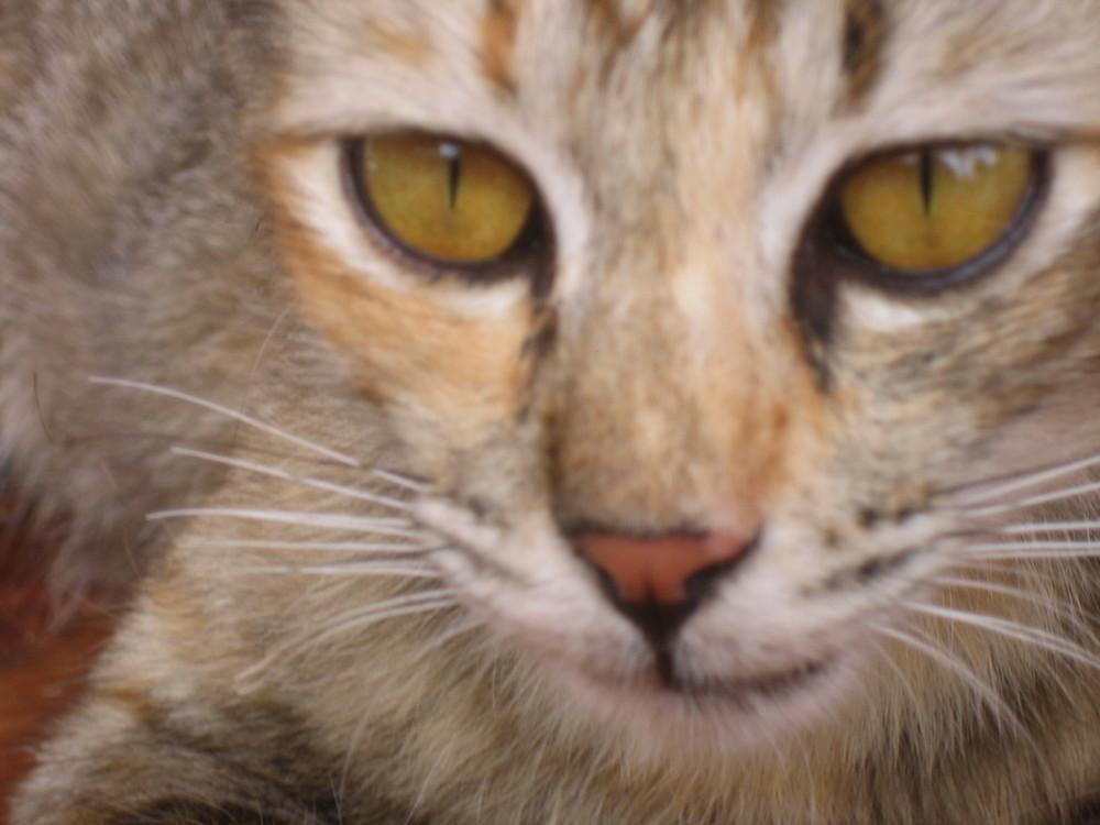 Katze auf Koh Phi Phi 08
