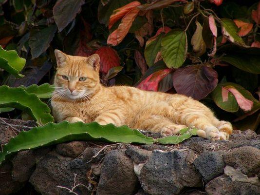 Katze auf Lanzarote