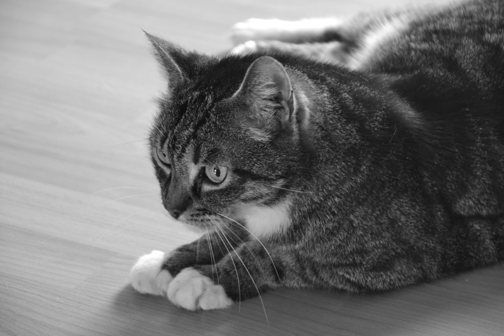 Katze auf Lauerstellung