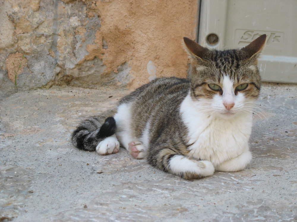 Katze auf Mallorca
