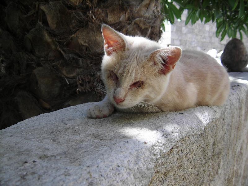 Katze auf Rhodos.