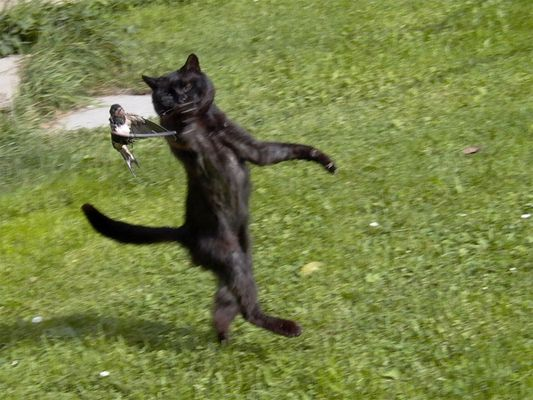 Katze auf Vogelfang