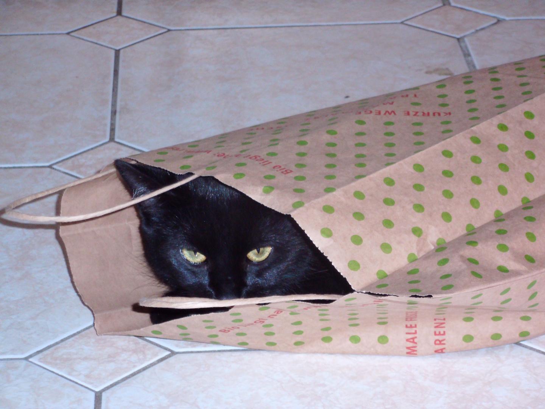 Katze aus der Tüte