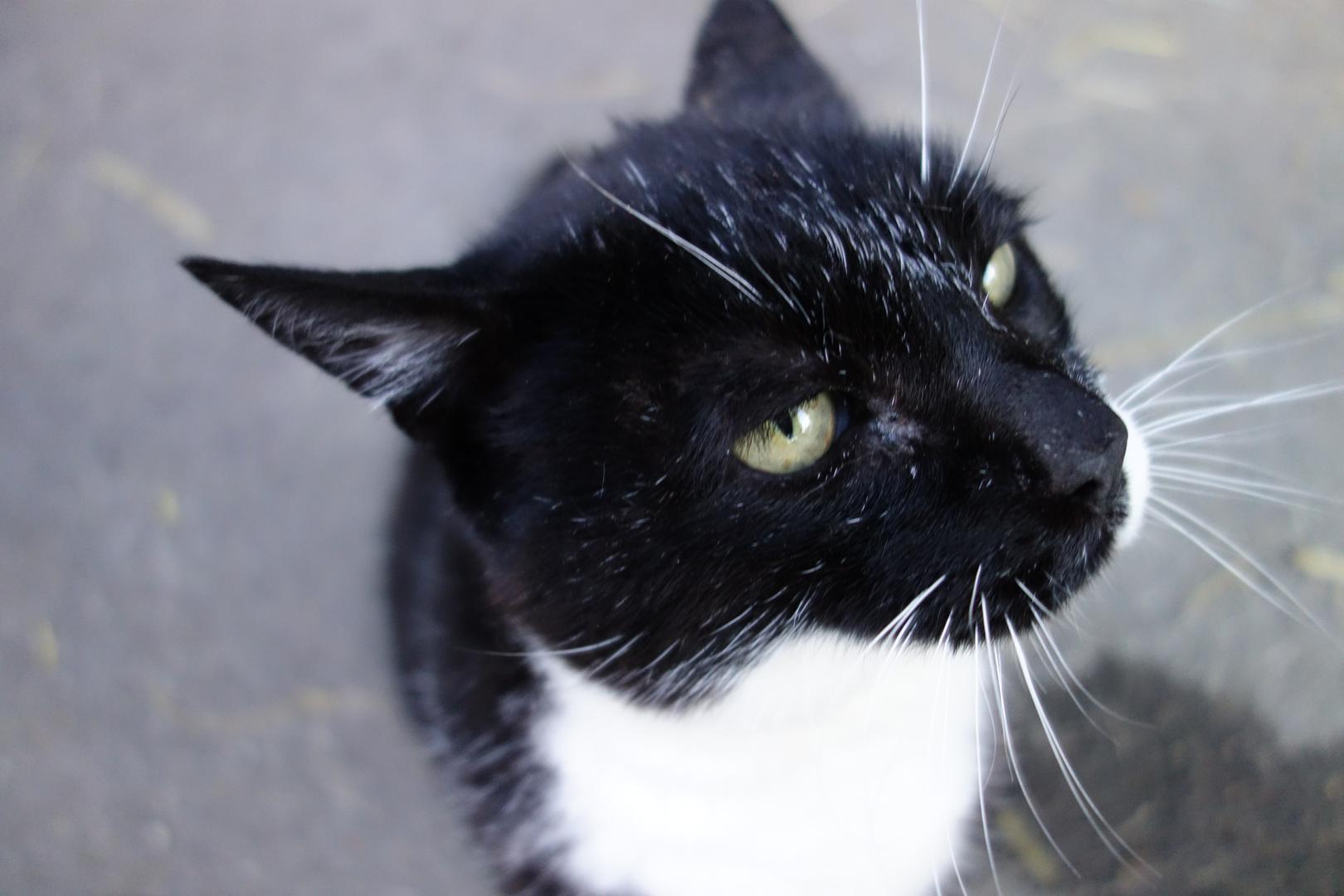 Katze bei der Reithalle in Ehingen
