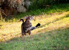 Katze bei ihrer Jad