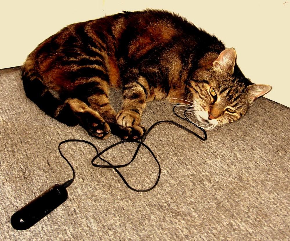 .....Katze bei ihrer Lieblingsbeschäftigung...nach dem essen chillen und Musik hören...