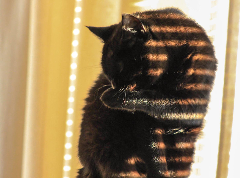 Katze beim Putzen