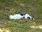 Katze beim Rücken kratzen