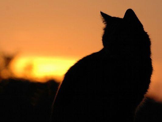 Katze beim Sonnenaufgang