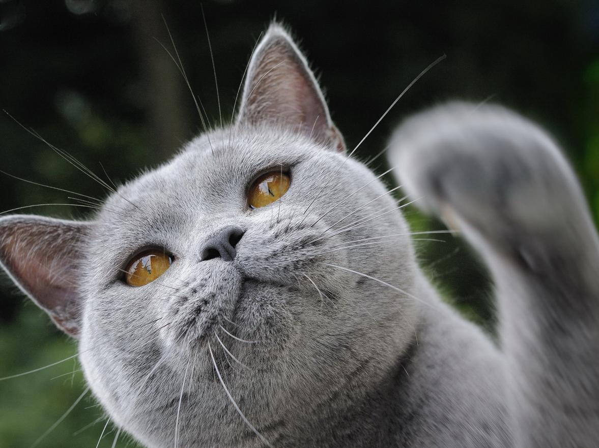 Katze beim spielen