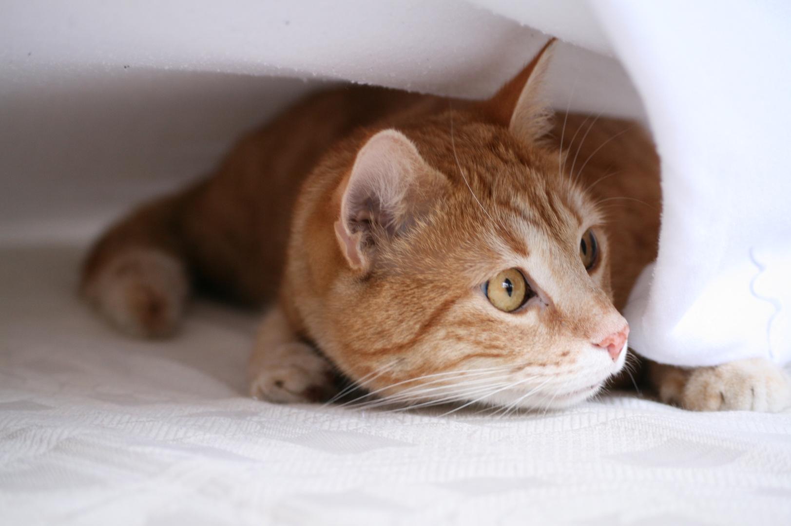 Katze beim Versteckspiel
