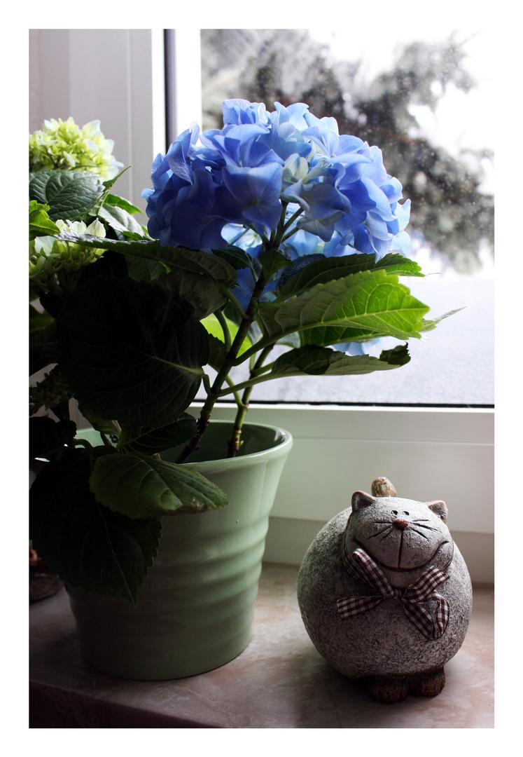 Katze bewacht Hortensie