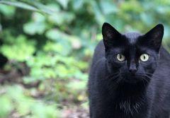 Katze - Blick ins Wohnzimmer: wo is'n der Beagle? -