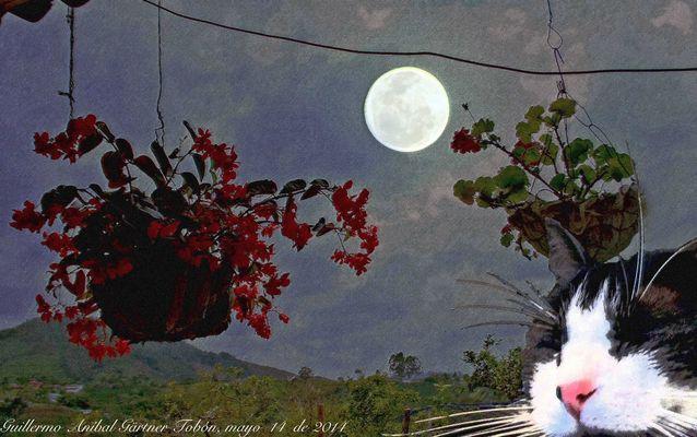 Katze, Blumen und Mond. Composing.
