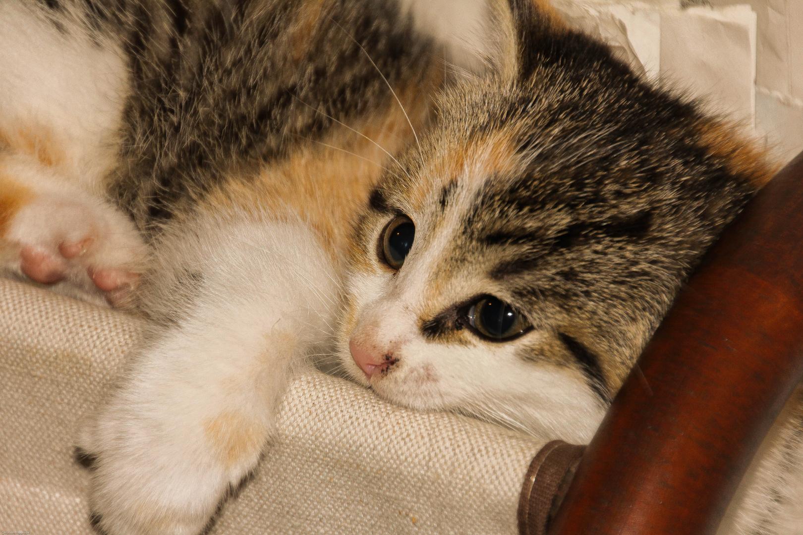 Katze Cleo