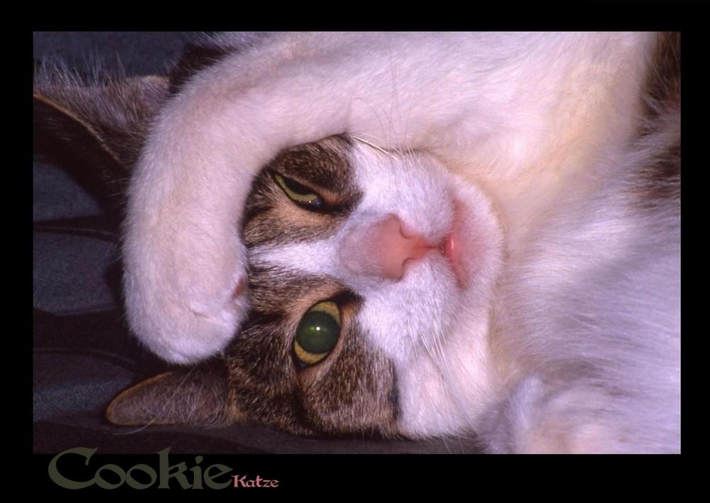Katze - Cookie - i'll sleep !!!