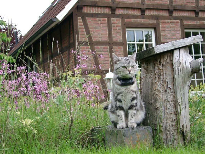 Katze Curly am Gartenteich