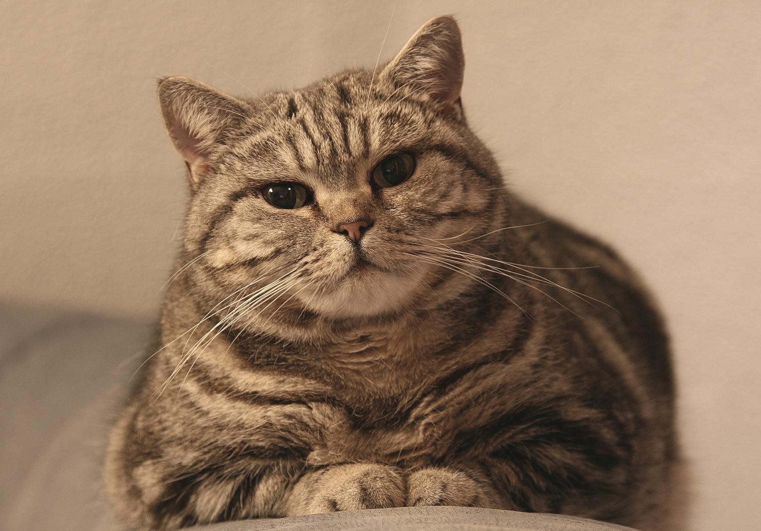 Katze Curly mit Stativ und 1Sek. Belichtung