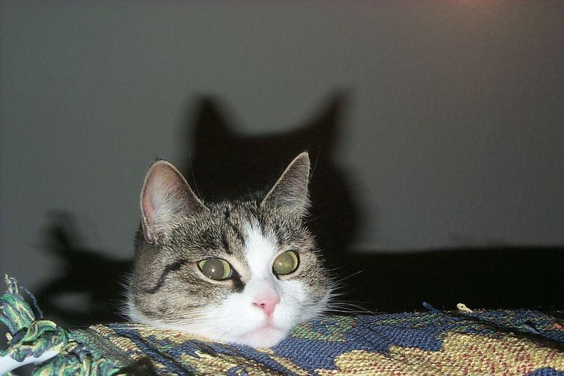 Katze Daisy auf dem Wäscheständer