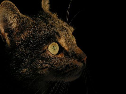 Katze der Nacht...