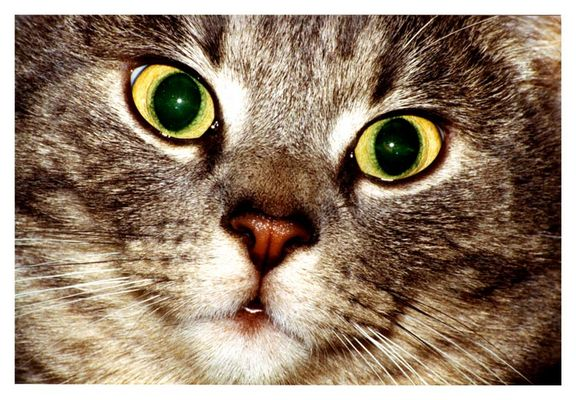 Katze frontal