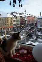 Katze genießt Ausblick