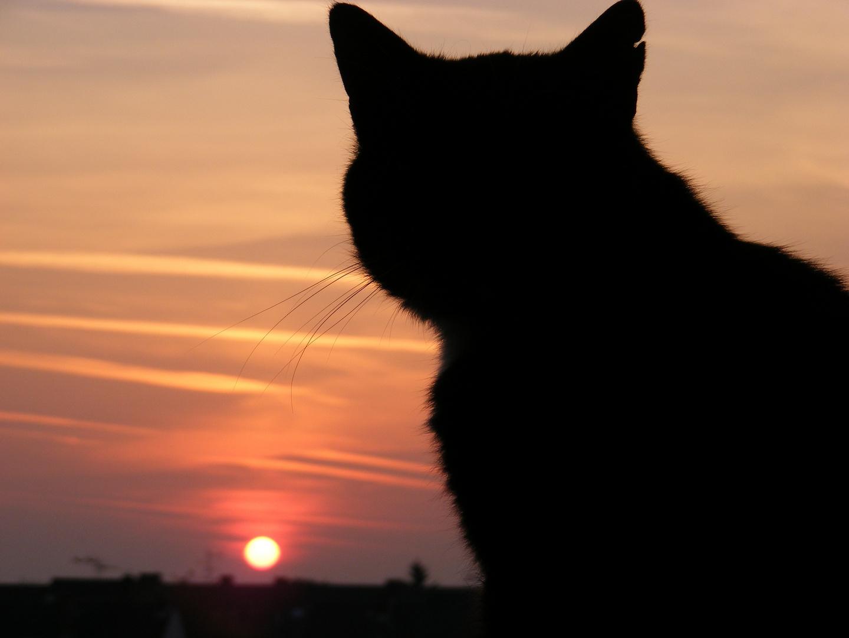 Katze genießt den Sonnenuntergang