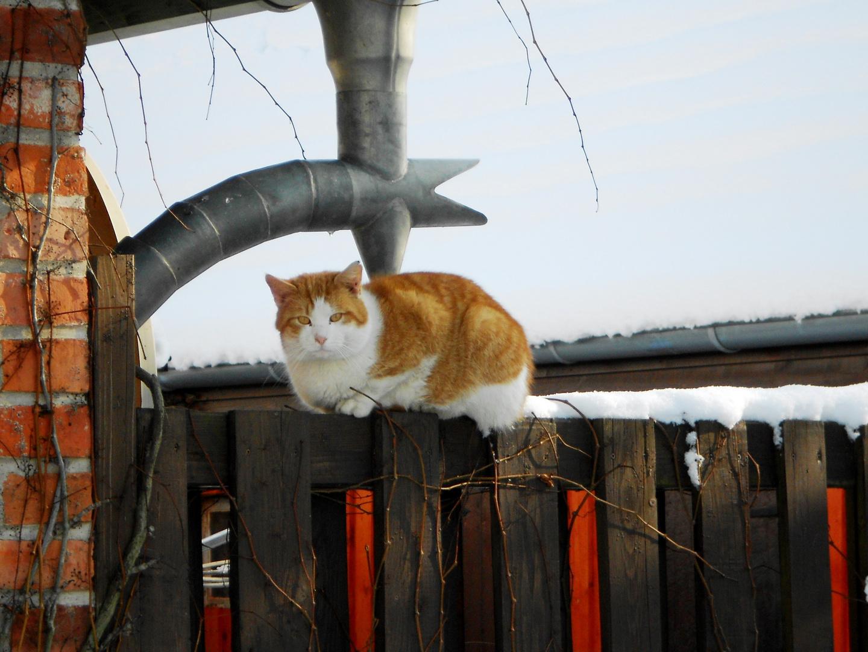 Katze genießt den Tag
